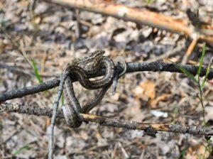 chien mordu serpent corps