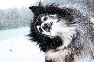 neige chien corps