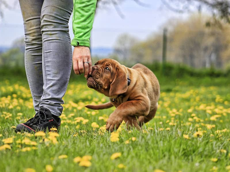 chien particulier