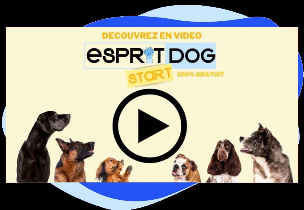 Esprit Dog Start